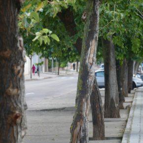 Cs pide que las futuras talas de árboles en Toledo se acompañen siempre de un proyecto de reposición o actuación para evitar que se degraden las zonas públicas